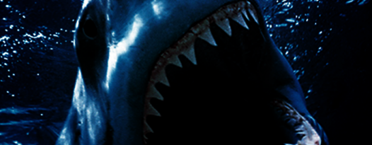 Shark Week isn't over until you've seen BAIT 3D at Mason Park this September