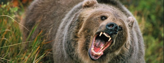 Catch a KILLER BEAR-ATHON this Sunday featuring two grizzly movies and a picnic to munch on!
